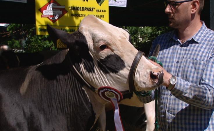 Nowinki techniczne i prezentacja krów na targach rolniczych
