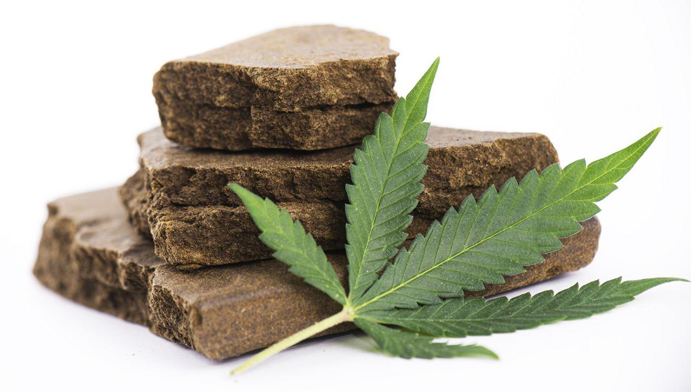 Każdego roku we Włoszech konsumuje się około 3 tys. ton marihuany i haszyszu (fot. Shutterstock/Roxana Gonzalez)