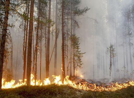 Szwecja płonie