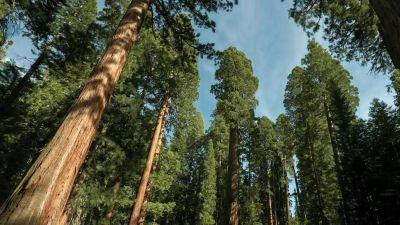 Natura w Jedynce: Planeta lasów. Świat tętniący życiem