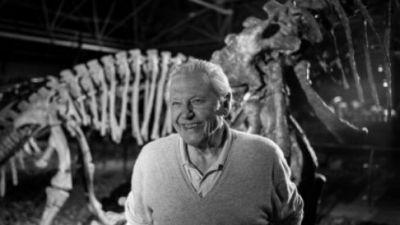Narodziny zwierząt według Davida Attenborough