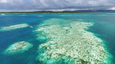 Natura w Jedynce: Dzika Japonia, cz. 2 Wyspy Południowo-Zachodnie