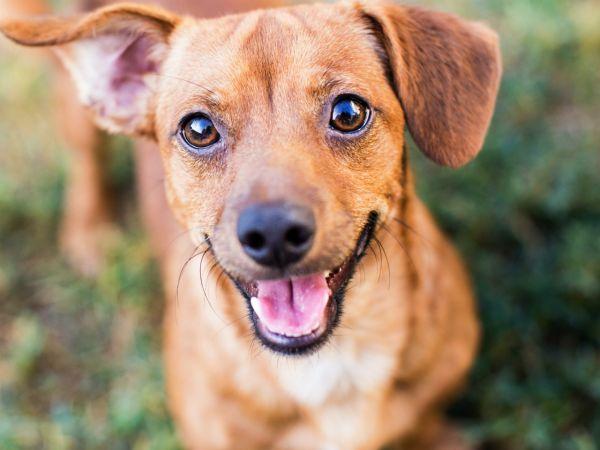Co myśli twój pies?