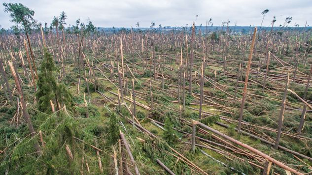 Letnie wichury uczyniły wielkie zniszczenia w lasach (fot. arch. PAP/Leszek Szymański)