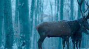 zamkniecie-25-festiwalu-filmowego-camerimage-2017-w-bydgoszczy-znamy-laureatow