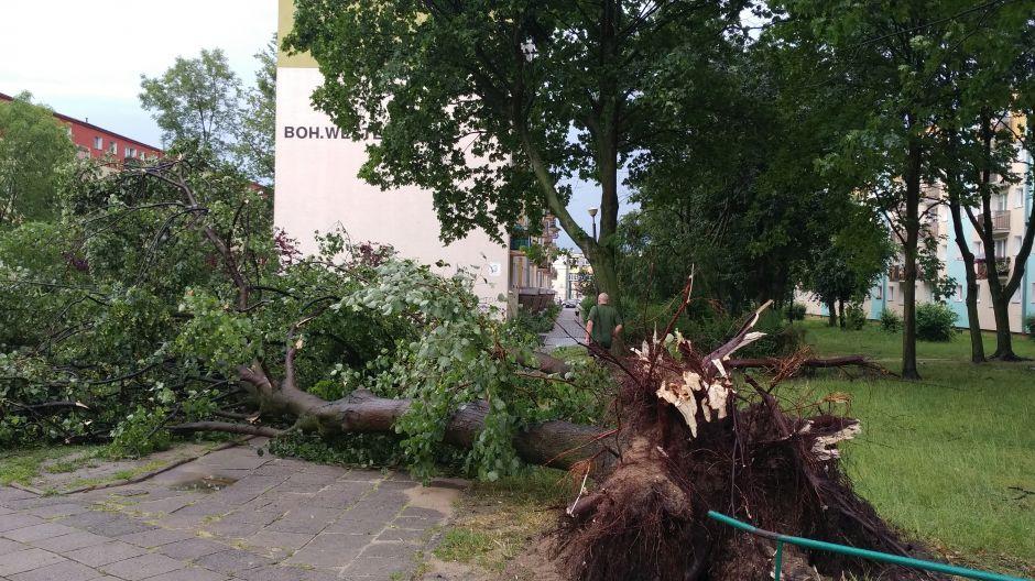 Drzewo wyrwane z korzeniami na Kapuściskach (nadesłane)