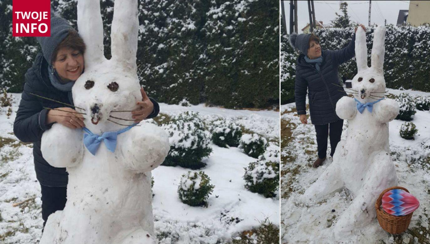 Zajączek ze śniegu (fot. Twoje info)