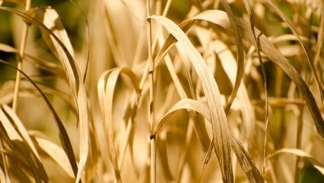 Łącznie do wojewody wpłynęło 1375 wniosków o oszacowanie strat w uprawach. (Fot. Pixabay).