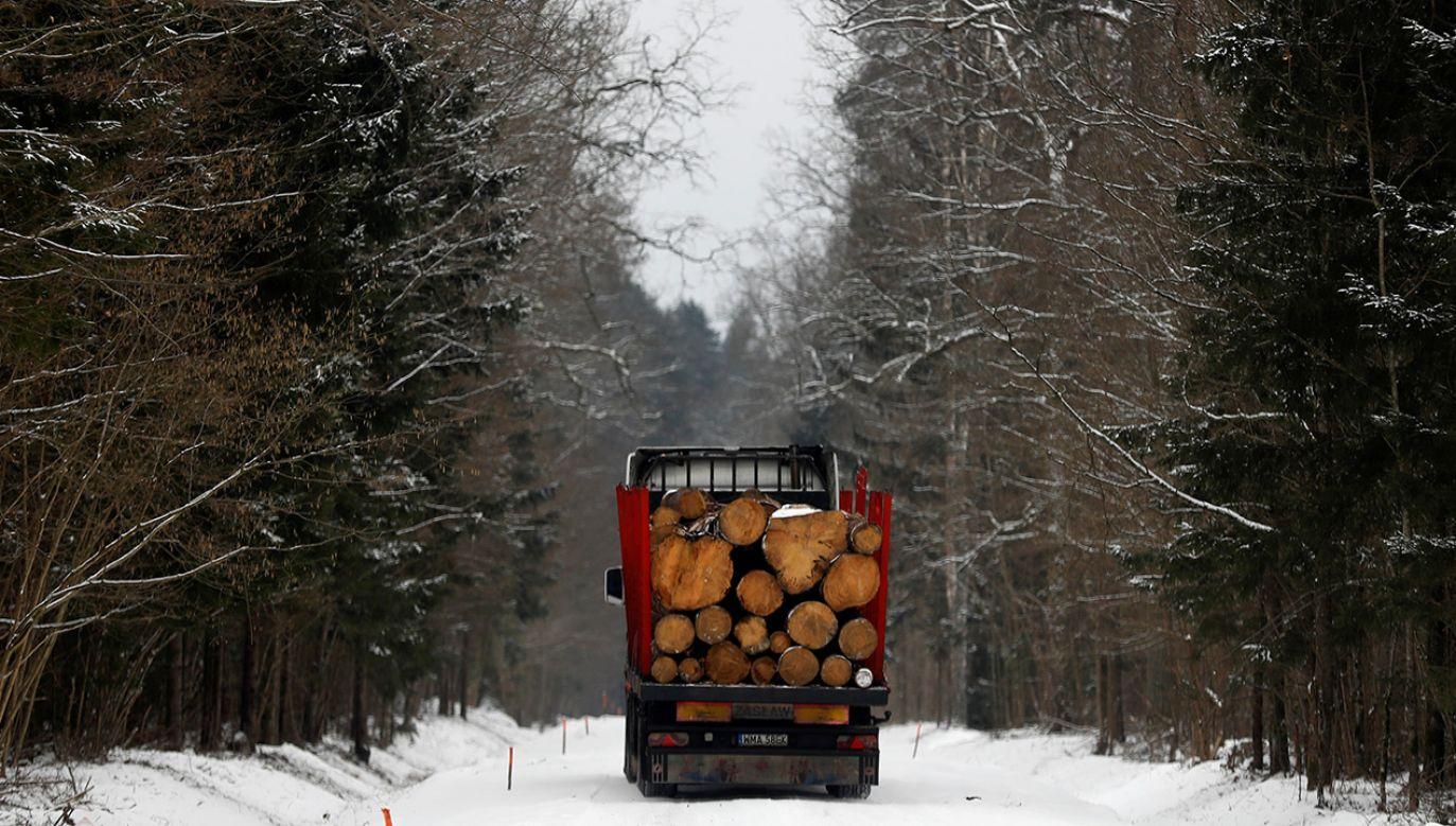 Prawdopodobnie w kwietniu Trybunał Sprawiedliwości wyda wyrok w sprawie wycinki drzew w Puszczy Białowieskiej (fot. REUTERS/Kacper Pempel)