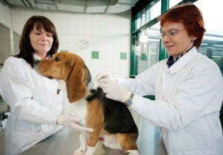 pasozyty-psow-i-kotow-problem-nie-tylko-weterynaryjny