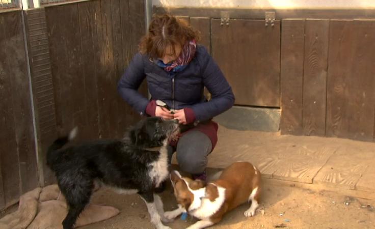 Psia psycholog ma pomóc zwierzakom w poszukiwaniach nowego domu