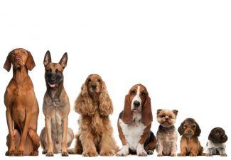 jakiego-psa-wybrac-do-adopcji