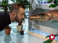 Sonda 2, odc. 43, Dinozaury