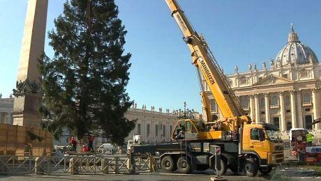 Mazurski świerk dotarł do Watykanu i stanął na placu św. Piotra
