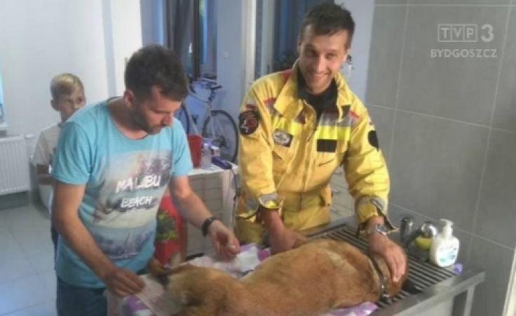 Weterynarz opatrzył rannego psa-ratownika, nie myśląc o zapłacie