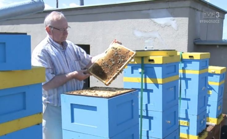 Miasta na ratunek pszczołom