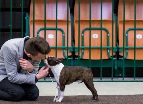 Wystawa psów rasowych w katowickim Spodku