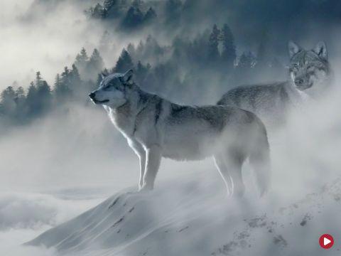 Słownik polsko@polski, Nosił wilk...,odc. 426