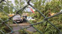 Złamane drzewo przygniotło samochód przy ul. Towarowej w Bydgoszczy (fot. Karol Stefański)