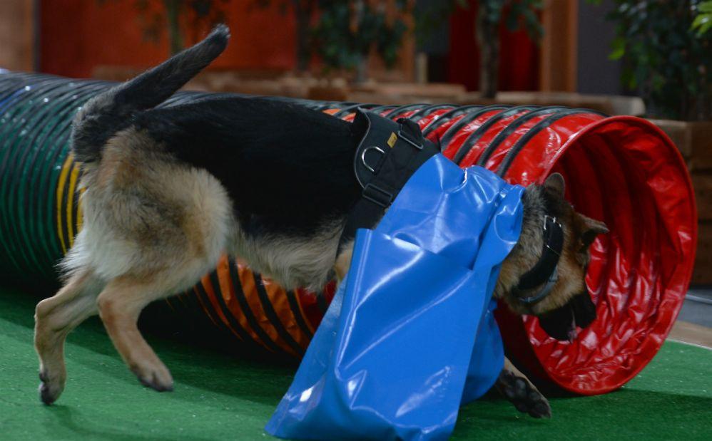 brego-to-pies-ktory-kocha-pokonywac-tunele-fot-i-sobieszczuktvp