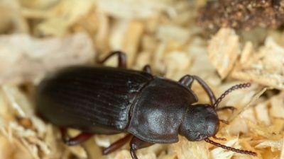 Tropem nieznanego – W pogoni za chrząszczami