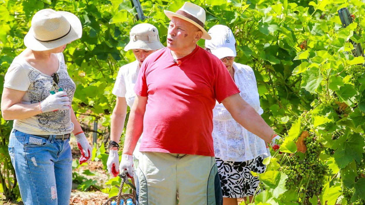 Mikołaj tłumaczył swoim dziewczynom produkcję wina od podstaw (fot. TVP)