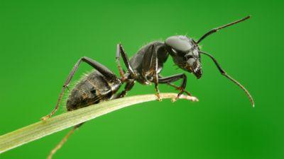Saga prastarej puszczy - Opowieść o mrówce: samotność w tłumie