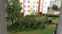 Ogromna choinka wyrwana z korzeniami na ul. Sandomierskiej na Kapuściskach (fot. Joanna Wieluńska)
