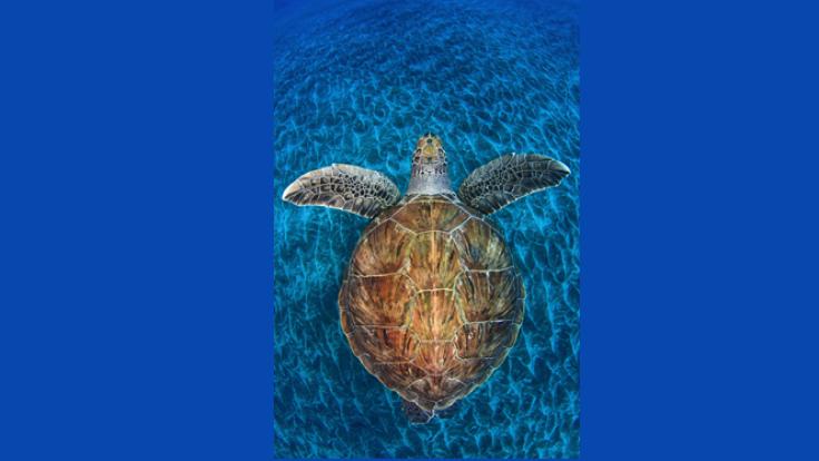 Żółwi klejnot, Jordi Chias, Hiszpania