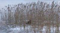 Pies przymarzł w trzcinach na jeziorze (fot. KWP Olsztyn)