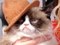 Pudsey, Grumpy Cat i Samson
