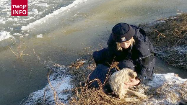 Zmarznięty i przestraszony pies został szczęśliwie uratowany (fot.Policja Mazowiecka)