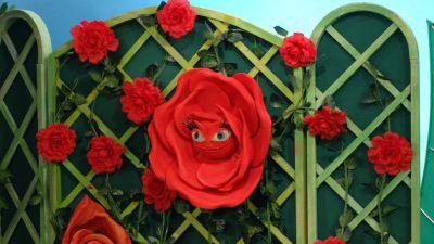 Domisie: Urodziny pani Róży