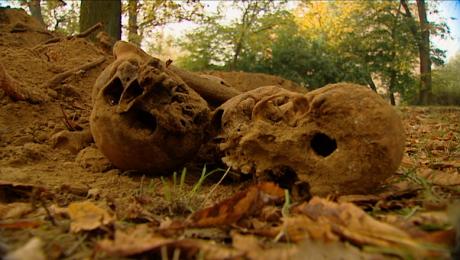 Kolejne znaleziska. Czaszki, kości i trumna przy ul. Walczaka