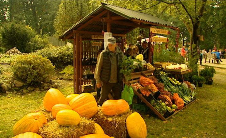 Fachowe porady i przydatne wskazówki dla ogrodników