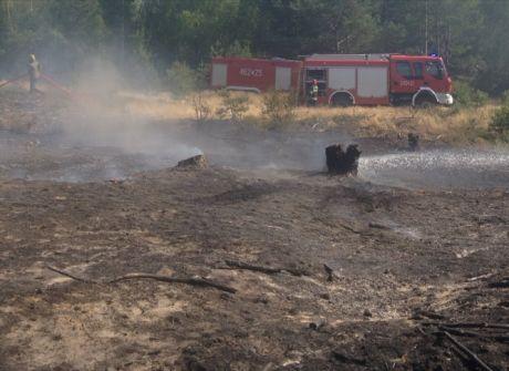 Pożar poszycia leśnego pod Gniewkowem