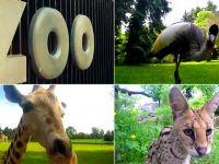 ZOO oczami zwierząt