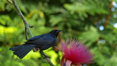 Natura w Jedynce - Skarby natury na Kubie