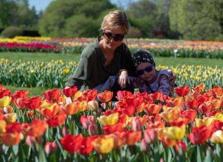 64 tysiące tulipanów w łódzkim ogrodzie