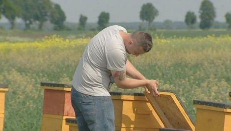 Tragedia w pasiece. Pszczelarze obwiniają rolników