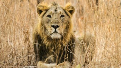 Natura w Jedynce: Najwspanialsi w królestwie zwierząt. Drapieżniki