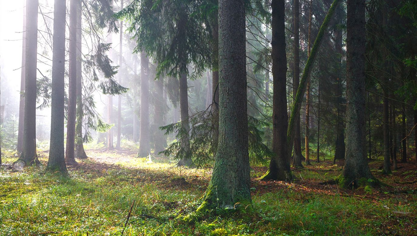 Ministerstwo środowiska długo argumentowało, że jego działania są zgodne z przepisami. (fot. Shutterstock/Aleksander Bolbot)