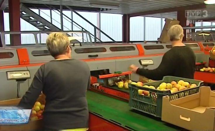 Ceny jabłek w skupie. Zmowa cenowa przetwórców?