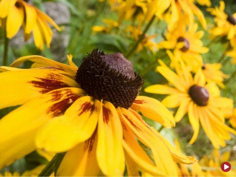 Rok w ogrodzie, 19.09.2015