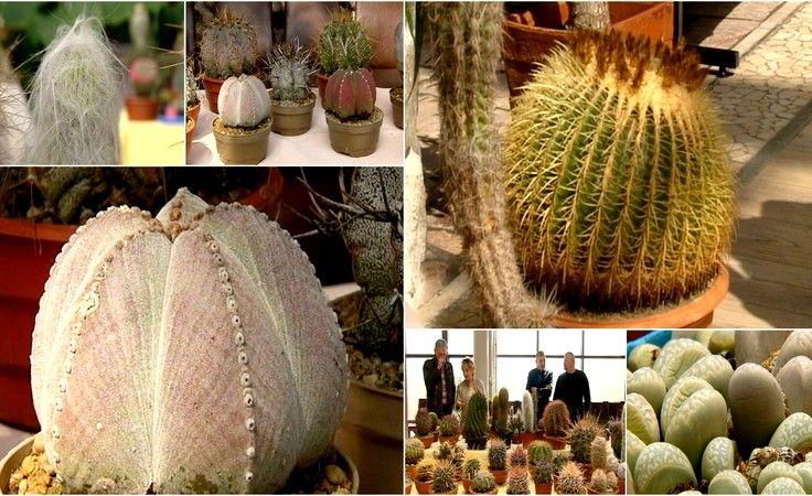 Palmy miały konkurencję pełną kolców. Wystawa kaktusów