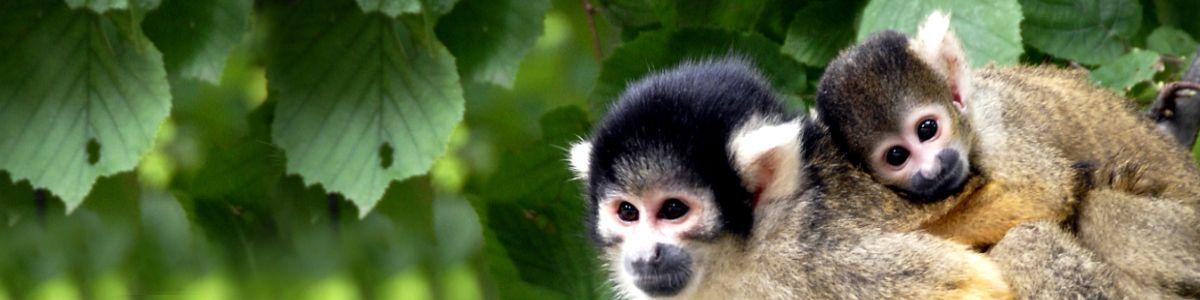 Wychowana przez małpy