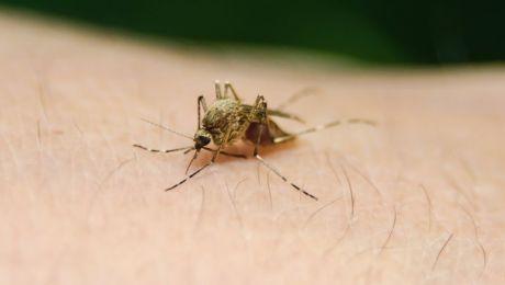 25 kwietnia światowy dzień walki z malarią