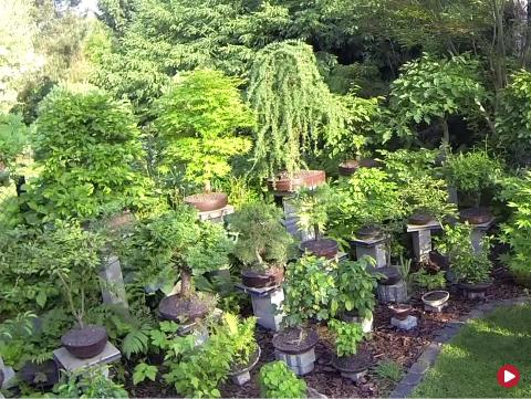 Rok w ogrodzie extra, 30.06.2018