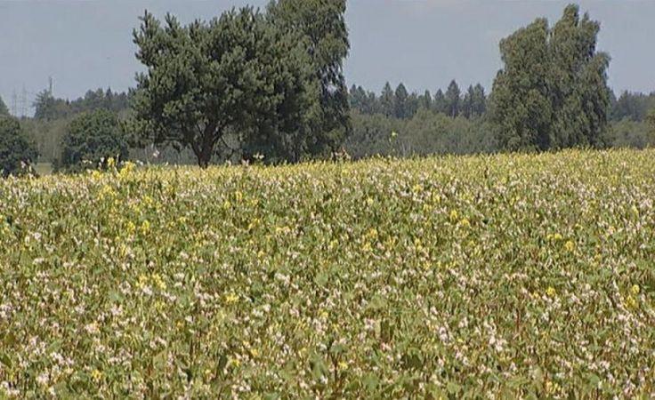 Rolnicza Solidarność ostrzega