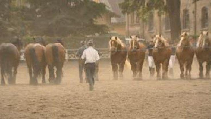 Konie zimnokrwiste były największymi gwiazdami wystawy koni w Kętrzynie.